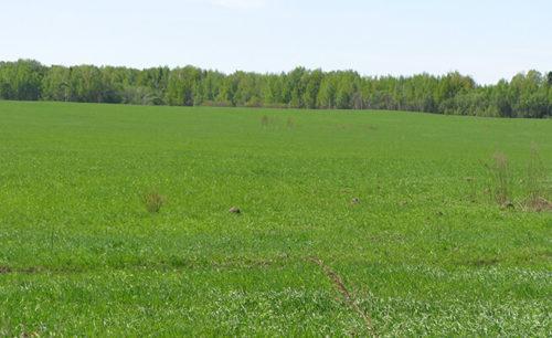 Участки для сельскохозяйственного назначения
